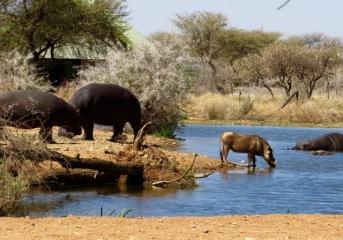 African wet bar