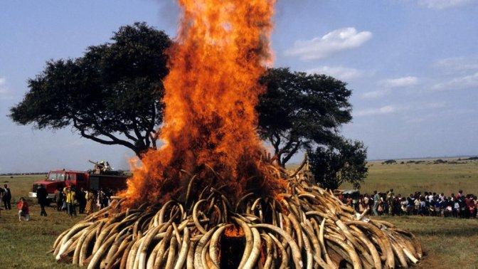 ivory_burn-jpg__800x450_q85_crop_upscale